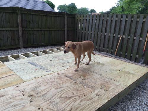sheeting dans 12x10 saltbox shed floor